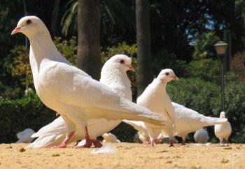 Enfermedades de Aves Cautivas