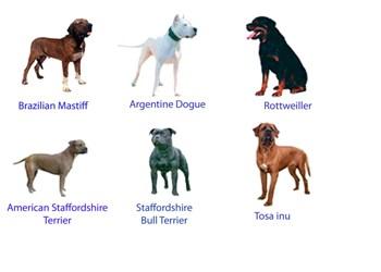 Existen las Razas de Perros Agresivas y Peligrosas