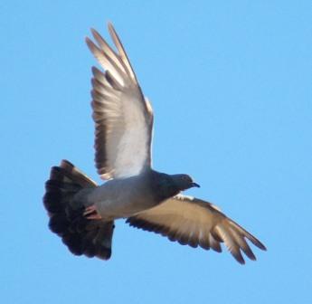 Las aves tienen cinco tipos de plumas
