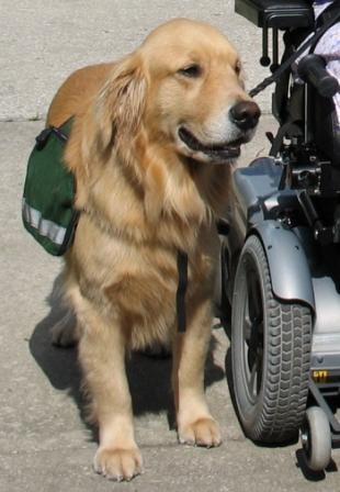 Qué Beneficios Tienen las Terapias con Animales