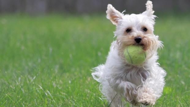 Cómo Adiestrar y Educar a mi Perro