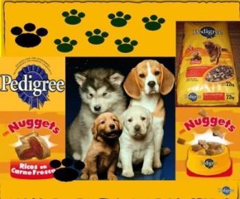 Marcas y Empresas de alimentos para mascotas