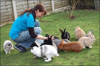Como Criar Conejos Domésticos