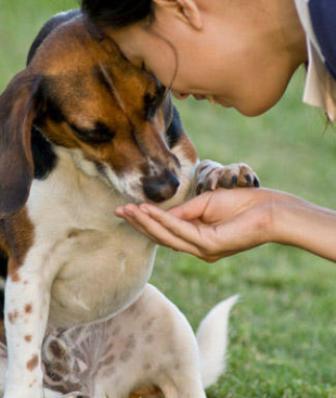 Beneficios de Tener un Perro Bien Educado