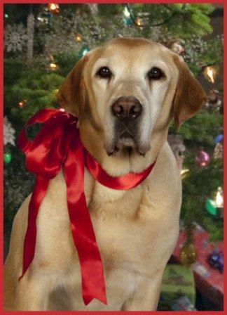 Comportamiento del Perro en Navidad