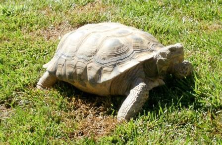 Foto de Se Puede Tener una Tortuga como Mascota en Casa
