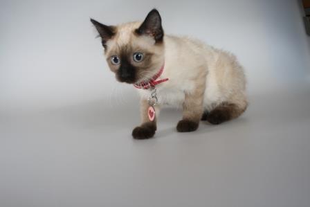 Foto de Debe usar el gato collar