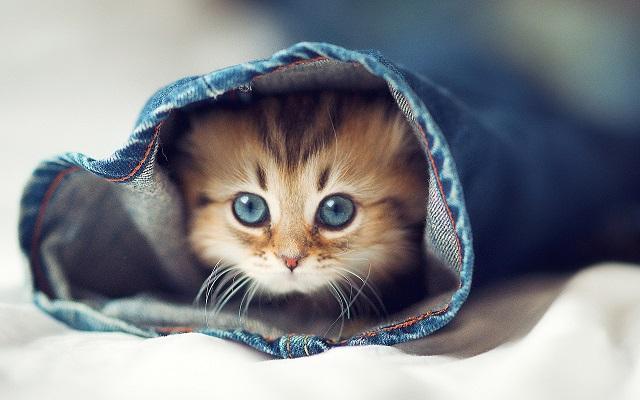 Un libro para comprender el misterio del mundo felino