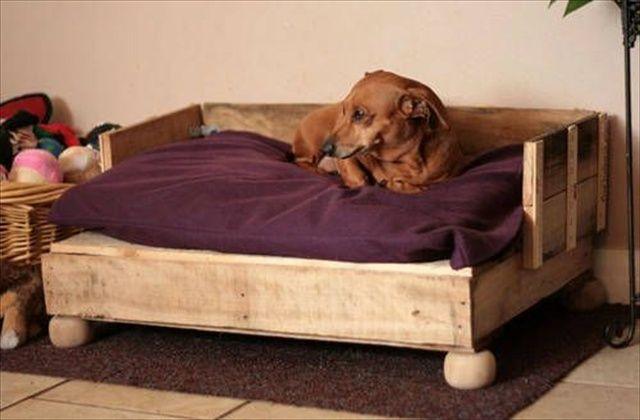 Qué es la cistitis canina