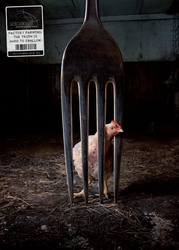 Las mejores campañas contra la crueldad animal