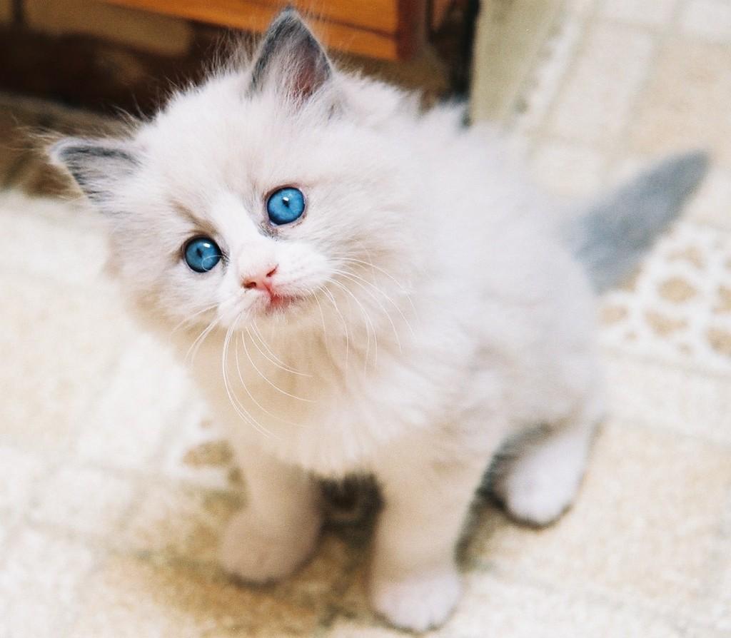 adoptar gato adopcion gatos