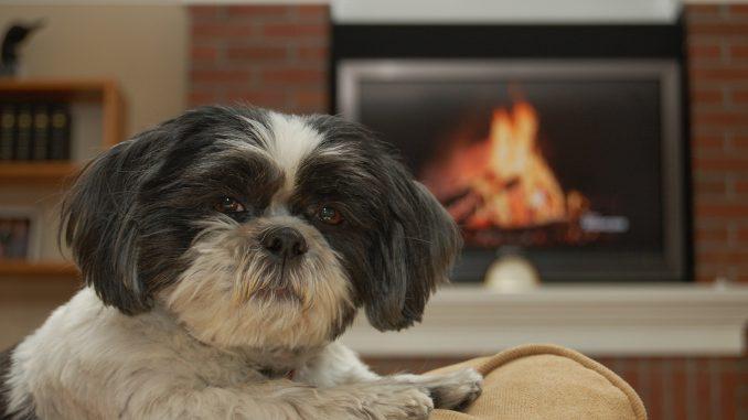 Las mejores razas de perro para tener en tu departamento