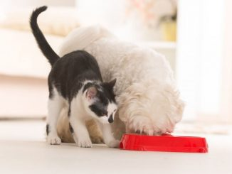 Cuidar la calidad de la comida de tus mascotas es darle una mejor vida