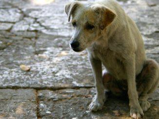Mascotas abandonadas en grandes ciudades