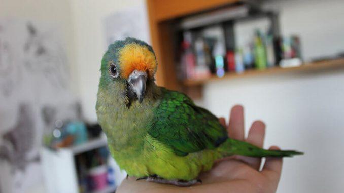 beneficios de contar con un ave