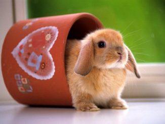 Conejos: 15 características que seguro no conocías