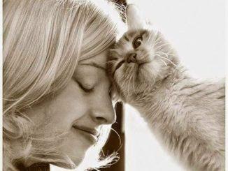 El Embarazo y su Relación con los Gatos