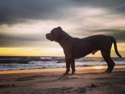 Para tener en cuenta cuando llevas tu perro a la playa