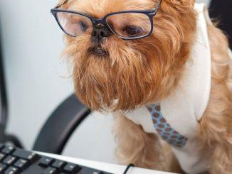 Beneficios de Llevar a tu Perro a la Oficina