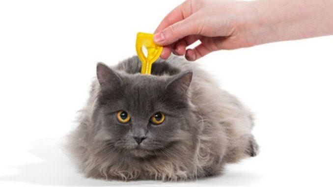 Como Eliminar las Garrapatas de mi Gato