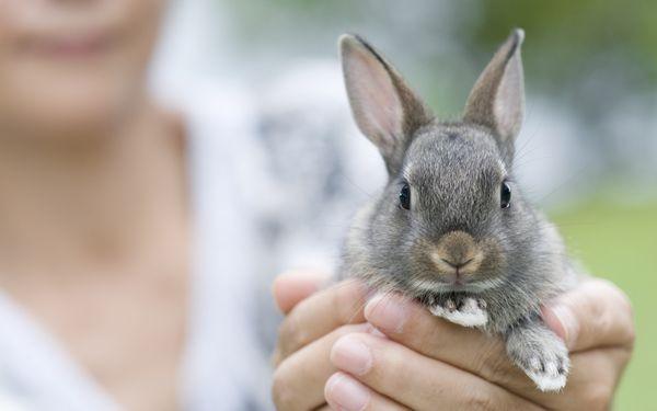 La Esperanza de Vida del Conejo
