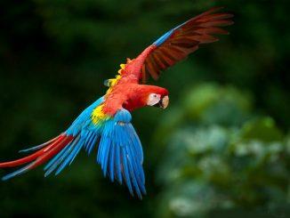 Especies de Loros del Amazonas
