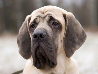 Morfología y Estructura General de los Perros