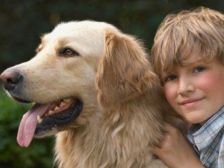 Razas de Perros más Cariñosos del Mundo