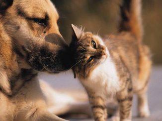 Cómo Hacer que un Perro y un Gato Convivan