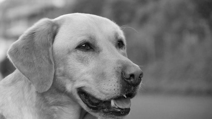 Cómo se Originaron las Diferentes Razas de Perros