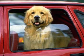 Cómo evitar el robo de Perros de Raza