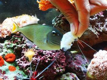 Clases de alimentos para peces for Comida congelada para peces
