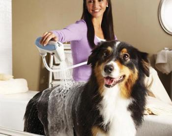 Cómo cuidar el pelo de los perros