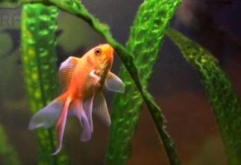 C mo y cuando dar de comer a un pez for Peces alimentacion