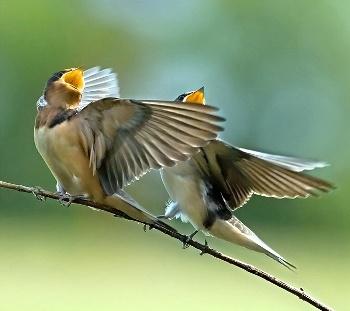El Canto de las Aves