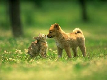 Cómo conviven perros y gatos sin pelear