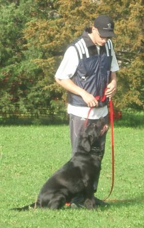 Qué es el Adiestramiento y Educación del Perro
