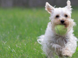 Qué Significa Adiestrar a un Perro
