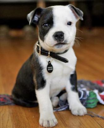 Como Criar un Cachorro de pocos meses