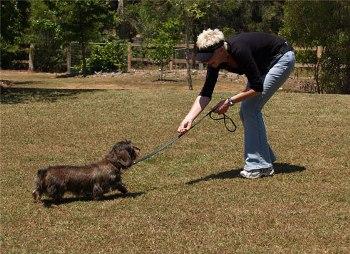 Técnicas para aprender a pasear a un Perro