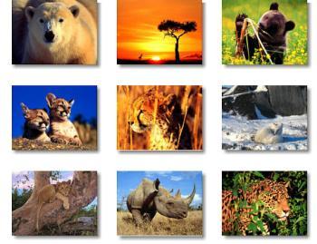 4 de octubre Día Mundial De Los Animales Historia