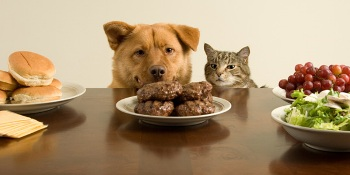 Componentes naturales para la Dieta de Perros y Gatos Según su Peso