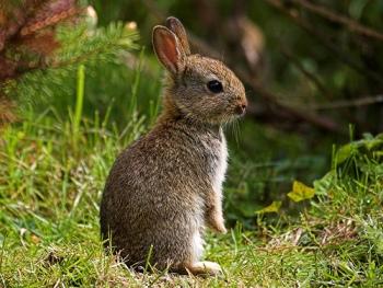 Dónde Debe Vivir Un Conejo