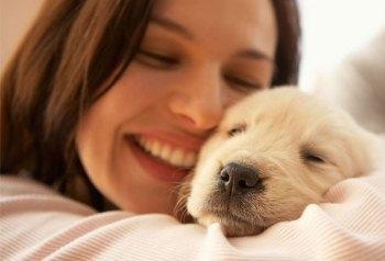 Cómo Enseñar y Cuidar a un Perro Cachorro en casa