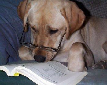 Cómo Saber Cuantos Años Tiene Tu Perro