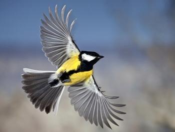 Morfología y Características de las Aves