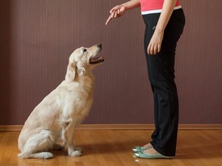 Foto de Es posible educar a un perro adulto