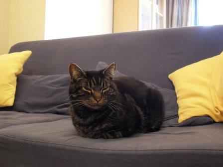 Foto de Cinco consejos para que tu gato se sienta a gusto en la casa