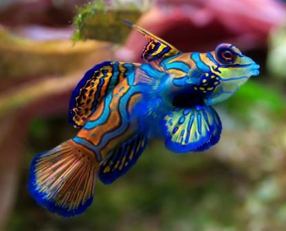 Especies de peces más coloridos y hermosos