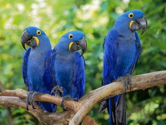 Las Aves más Exóticas Parte 2